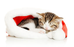 Beautiful cat in a New Year's cap Royalty Free Stock Photo