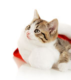 Beautiful cat in a New Year's cap Royalty Free Stock Image