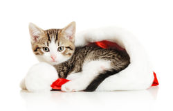 Beautiful cat in a New Year's cap Royalty Free Stock Photography