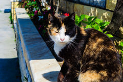 Beautiful Cat Next To A Garden Stock Images