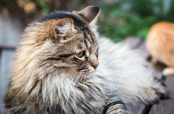 Beautiful cat on old brown wood stock image