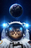 Beautiful cat in outer space Stock Photography