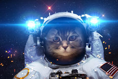 Beautiful cat in outer space Royalty Free Stock Photo
