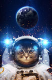 Beautiful cat in outer space. Elements of this image furnished by NASA Stock Image