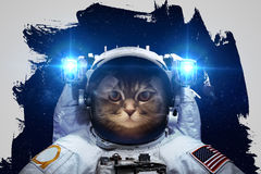 Beautiful cat in outer space Royalty Free Stock Images