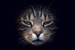 Beautiful cat portrait Royalty Free Stock Images