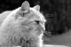 Beautiful cat Stock Photography