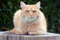 Beautiful cat relaxing on the garden Stock Photo