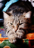 Beautiful cat relaxing on sofa Stock Photo