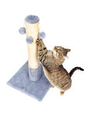 Beautiful cat with scratching post stock image
