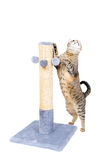 Beautiful cat with scratching post stock photos