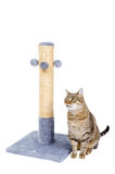 Beautiful cat with scratching post royalty free stock photography