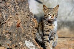 Beautiful cat setting with tree and looking into camera royalty free stock images