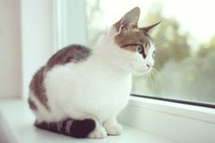 Cat sits on a white window sill Royalty Free Stock Photo