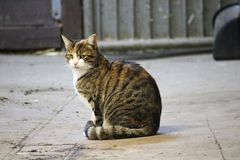 Sitting cat portrait stock photos