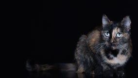 Beautiful cat Royalty Free Stock Photography