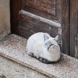 Beautiful cat sitting in front of a wooden door Stock Photo