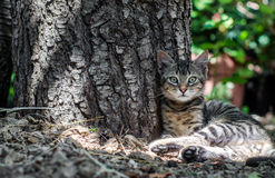 Beautiful cat sitting near a tree trunk Stock Images
