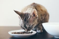 Tabby cat eating dry cat food. Beautiful cat sitting next to a food bowl placed on the floor next to the living room Royalty Free Stock Photography