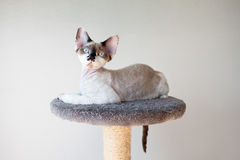 Beautiful cat sitting on the scratching post. Pretty little funny kitten looking Stock Images
