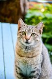 Cat. Beautiful cat  sitting on wooden bench looking  near a garden Stock Photography