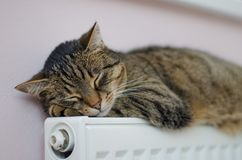A beautiful cat sleeping in the house on a heater. A beautiful tabby cat sleeping in the house on a heater. Cat is a happy pet and the whole family loves her royalty free stock images
