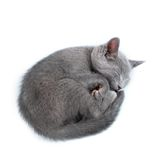 Beautiful cat Stock Photos