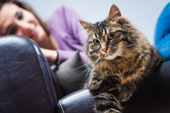 Beautiful cat on the sofa Royalty Free Stock Images