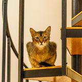 Beautiful cat standing in the kitchen. Beautiful cat sitting in the kitchen on a spiral staircase Stock Photography
