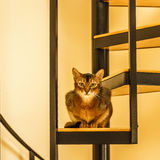 Beautiful cat standing in the kitchen. Beautiful cat sitting in the kitchen on a spiral staircase Stock Photos