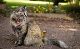 Beautiful cat staring aside while sitting royalty free stock photography