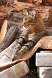 Beautiful cat. Striped cat, cat bask in the sun, baleen carnivores, cat asleep on the wood, cat on the background of wooden logs, pet, sleeping cat, cat on the stock photography