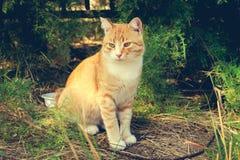 Beautiful cat. Toned image. Royalty Free Stock Photos