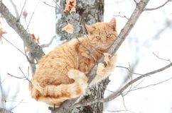 Cat in a tree Stock Photos