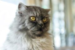 Beautiful cat Royalty Free Stock Images