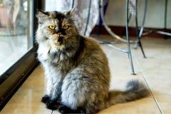 Beautiful cat. Beautiful view  travel asia landscape cat animal Stock Images