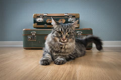 Beautiful cat with vintage suitcases Stock Images