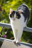 Cat is walking on a balcony banisters. A beautiful cat is walking on a balcony banisters royalty free stock images