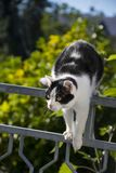 Cat is walking on a balcony banisters. A beautiful cat is walking on a balcony banisters stock photos