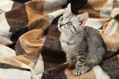 Beautiful cat on a warm plaid Royalty Free Stock Photography