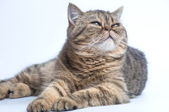 Beautiful cat on white Royalty Free Stock Photo