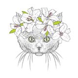 A beautiful cat in a wreath of lilies. Lovely kitten in a flower wreath. A purebred cat. Vector illustration. Stock Image