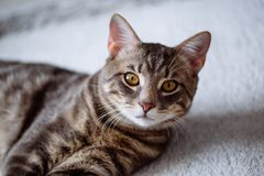 Beautiful cat with yellow eyes, sitting on the floor. Looking towards the camera Stock Photo