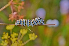 Beautiful caterpillar against a colorful background Royalty Free Stock Photography