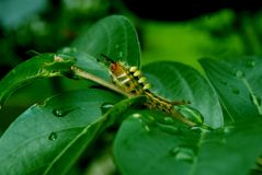 Caterpillar in green leaf stock photos