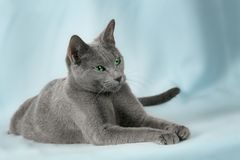 Beautiful cats Stock Photos