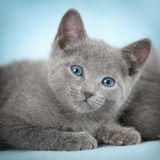 Beautiful cats Stock Photo