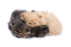 Beautiful cats Stock Photo