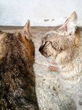 Cats in love. Beautiful cats family kissing outdoor Royalty Free Stock Photos