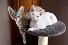 Beautiful cats sitting on the scratching post Royalty Free Stock Images